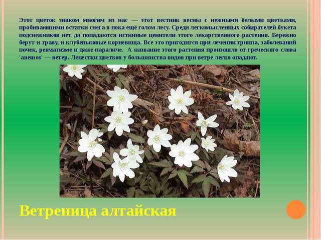 Этот цветок знаком многим из нас — этот вестник весны с нежными белыми цветка...