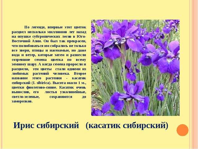По легенде, впервые этот цветок расцвел несколько миллионов лет назад на опу...