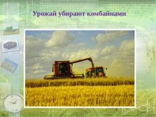Урожай убирают комбайнами