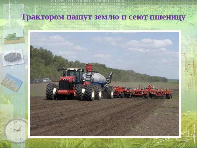 Трактором пашут землю и сеют пшеницу