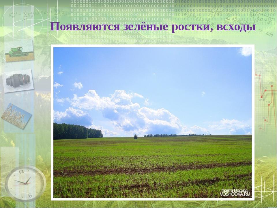 Появляются зелёные ростки, всходы