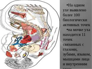. На одном ухе выявлено более 100 биологически активных точек на мочке уха н