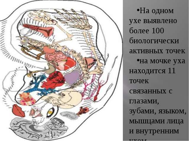 . На одном ухе выявлено более 100 биологически активных точек на мочке уха н...