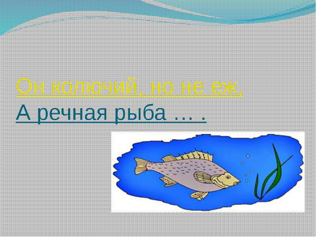 Он колючий, но не еж, А речная рыба … .
