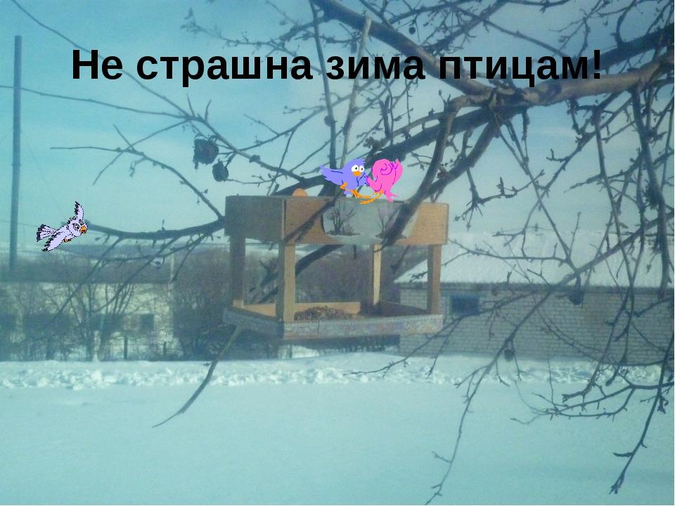Не страшна зима птицам!