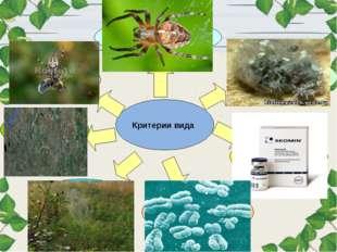 Критерии вида Морфологический Физиологический Биохимический Экологический Ген