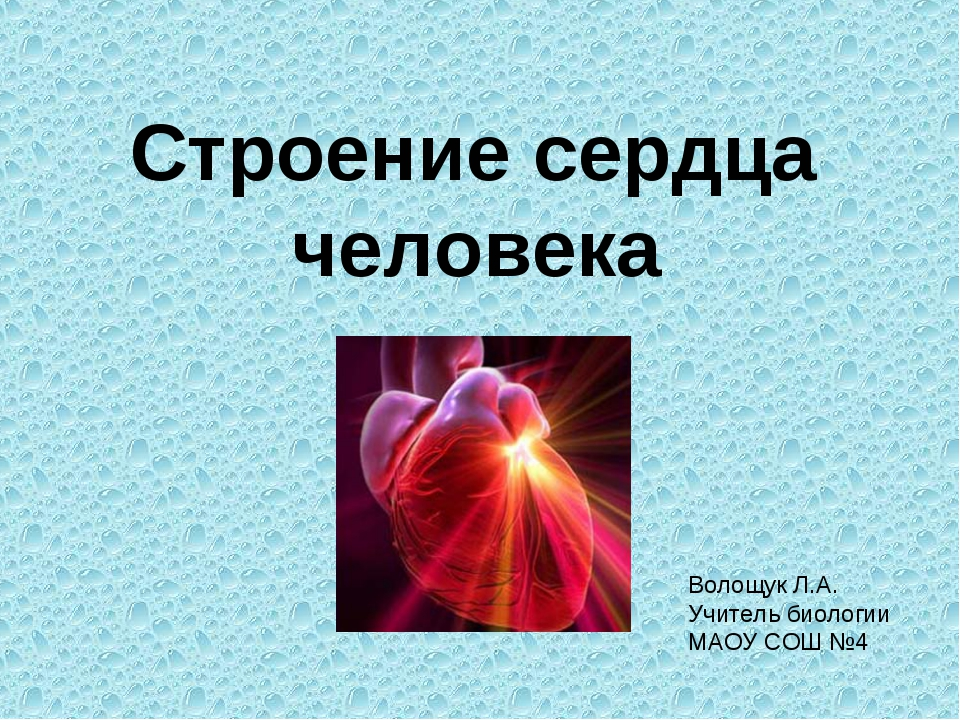 Строение сердца человека Волощук Л.А. Учитель биологии МАОУ СОШ №4