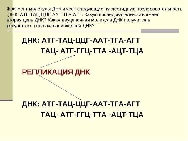ДНК: АТГ-ТАЦ-ЦЦГ-ААТ-ТГА-АГТ ТАЦ- АТГ-ГГЦ-ТТА -АЦТ-ТЦА РЕПЛИКАЦИЯ ДНК ДНК: АТ...
