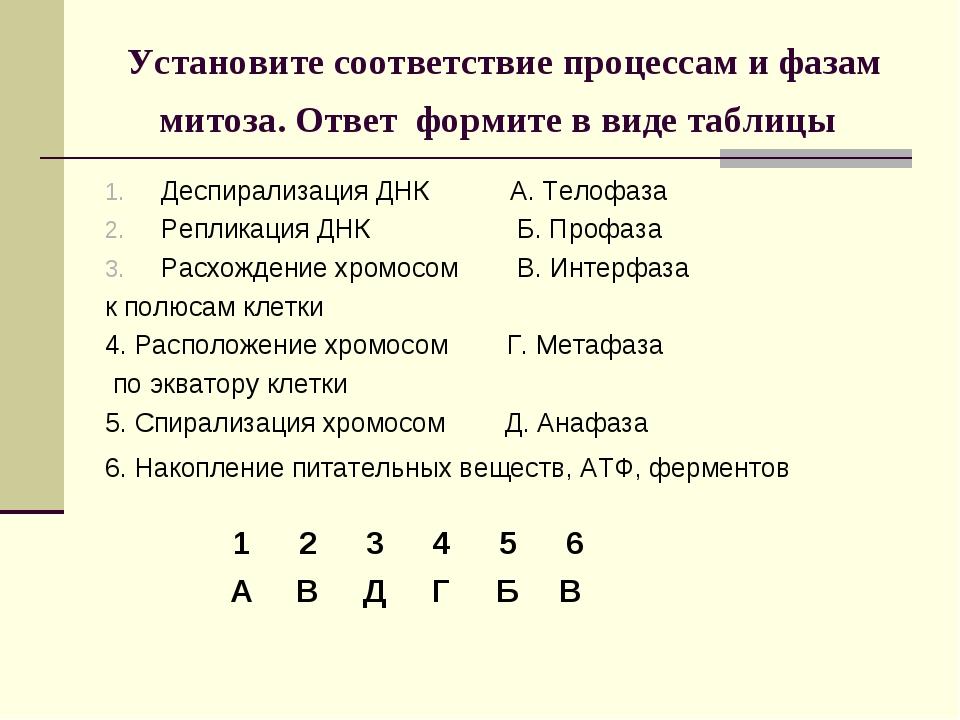 Установите соответствие процессам и фазам митоза. Ответ формите в виде таблиц...