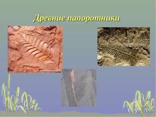 Древние папоротники