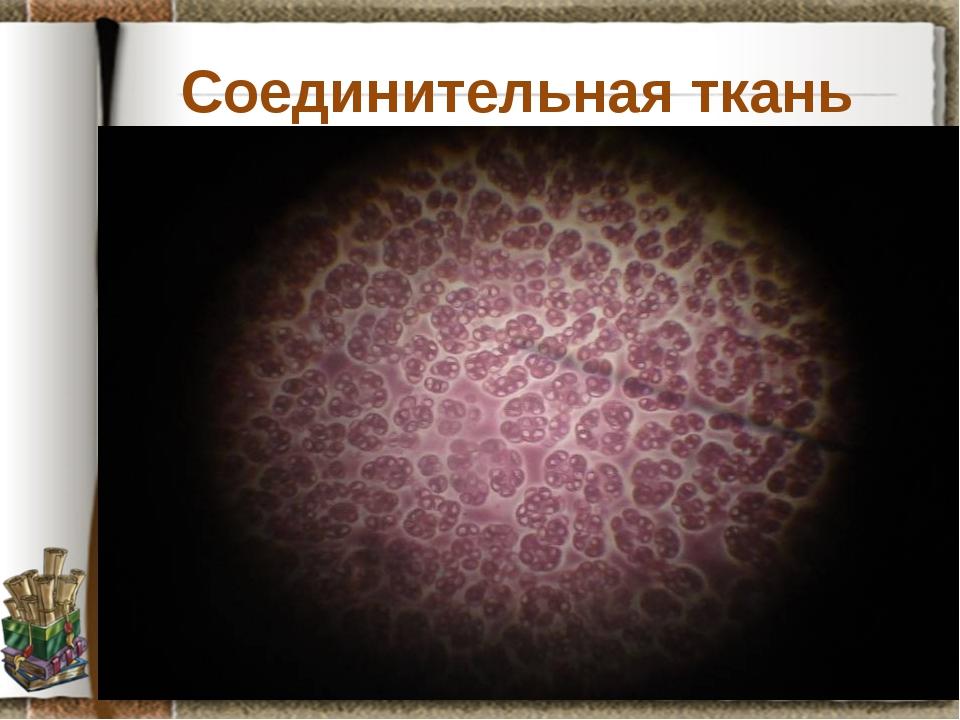 Соединительная ткань Задание: рассмотрите препарат крови лягушки, установите...