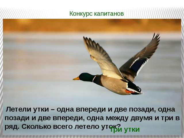 Конкурс капитанов Летели утки – одна впереди и две позади, одна позади и две...