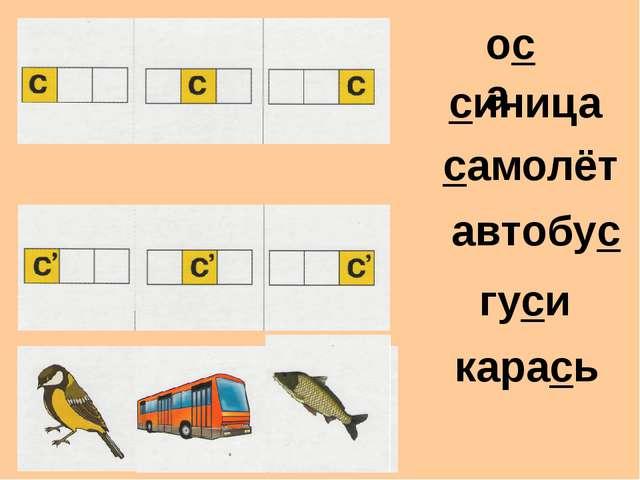 оса синица самолёт автобус гуси карась