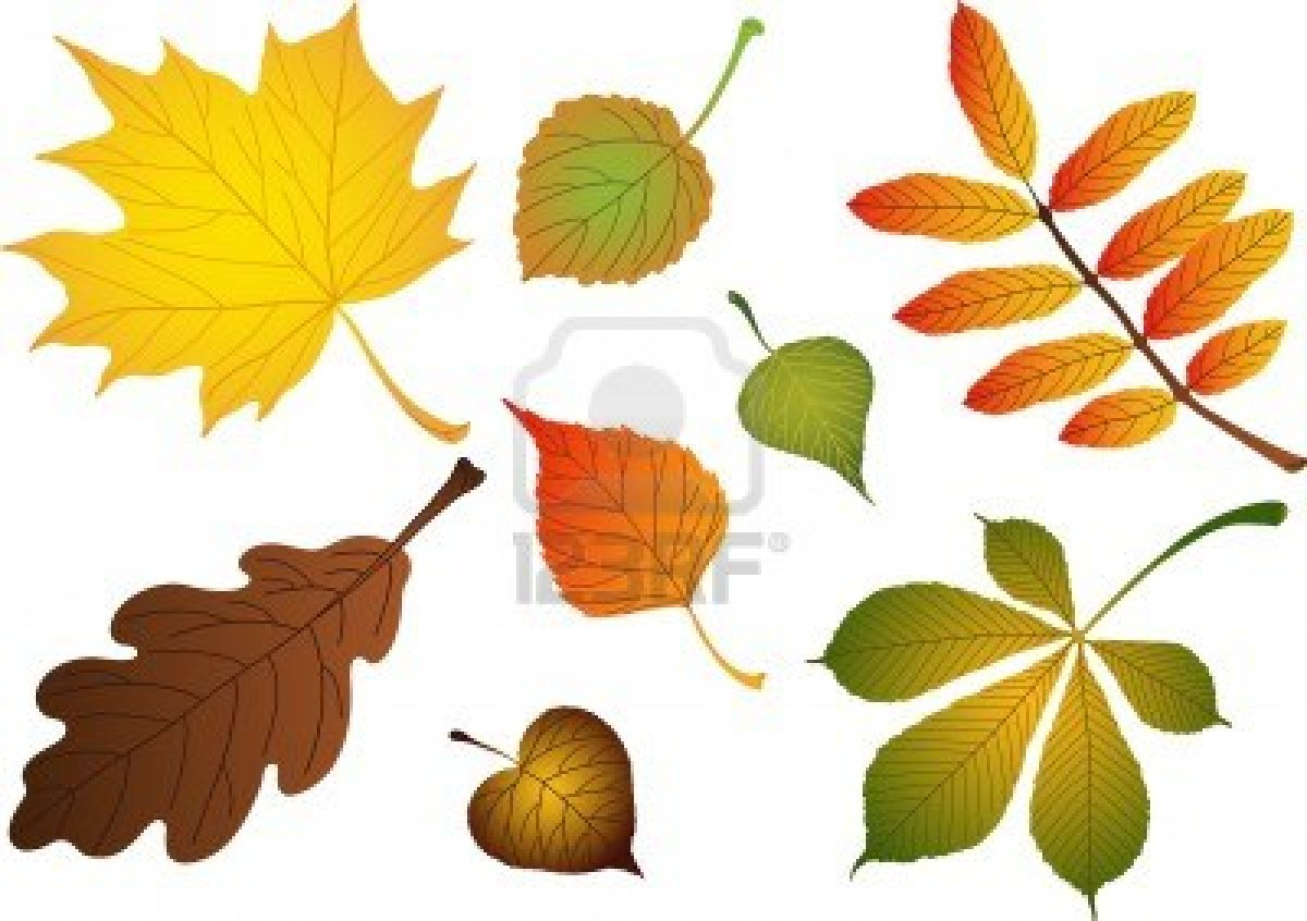 http://us.123rf.com/400wm/400/400/ragnarocks/ragnarocks0710/ragnarocks071000013/1986299-vectors-composite-of-various-autumn-leaves-birch-maple-oak-rowan-lime-chestnut-poplar-aspen.jpg