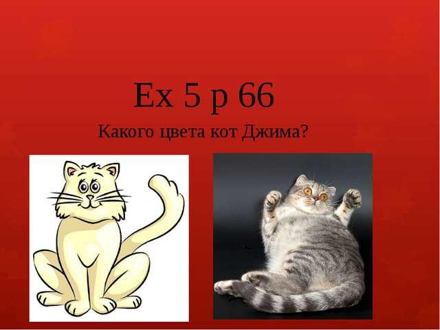 Ex 5 p 66 Какого цвета кот Джима?