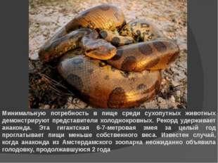 Минимальную потребность в пище среди сухопутных животных демонстрируют предст