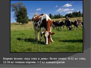 Корове нужно «пуд сена в день» более точно: 8-12 кг сена, 12-16 кг сочных кор