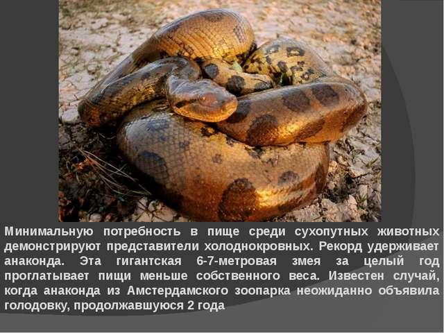Минимальную потребность в пище среди сухопутных животных демонстрируют предст...