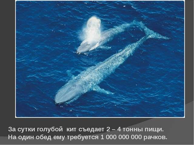 За сутки голубой кит съедает 2 – 4 тонны пищи. На один обед ему требуется 1 0...