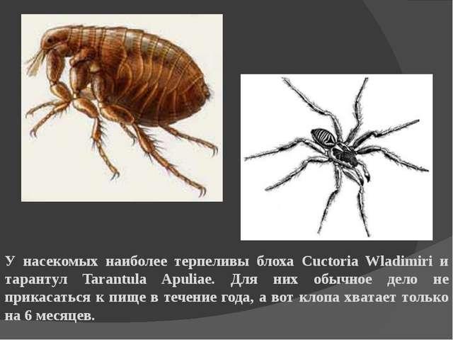 У насекомых наиболее терпеливы блоха Cuctoria Wladimiri и тарантул Tarantula...