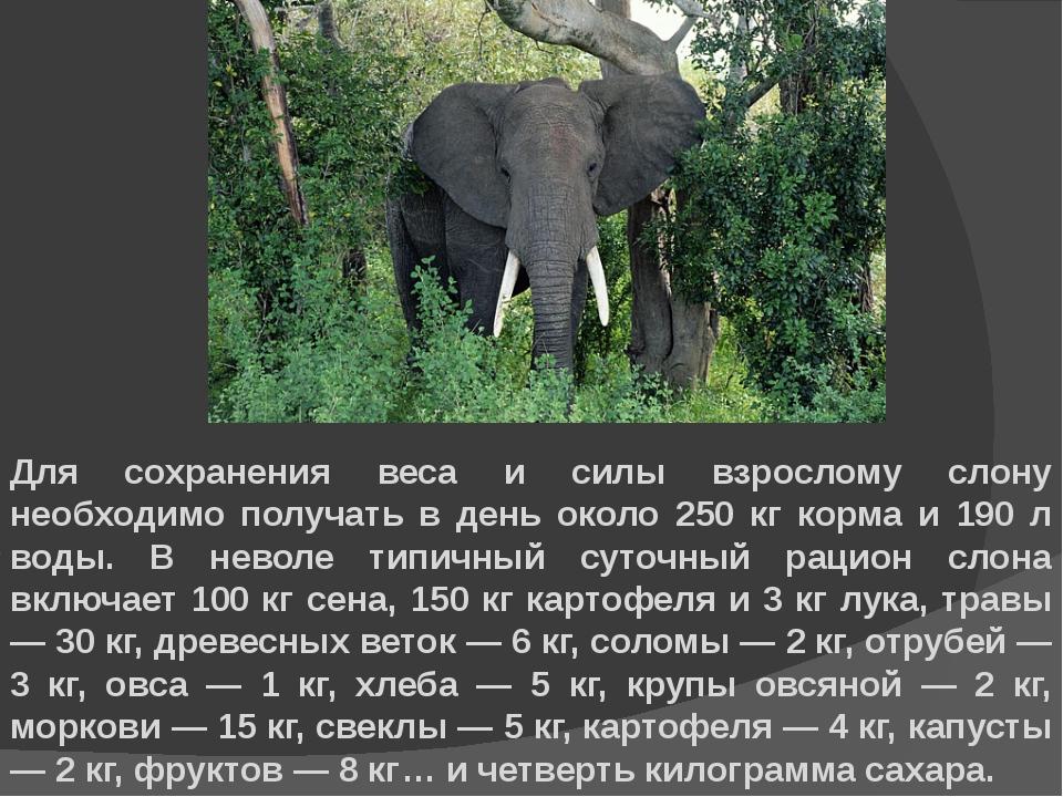 Для сохранения веса и силы взрослому слону необходимо получать в день около 2...
