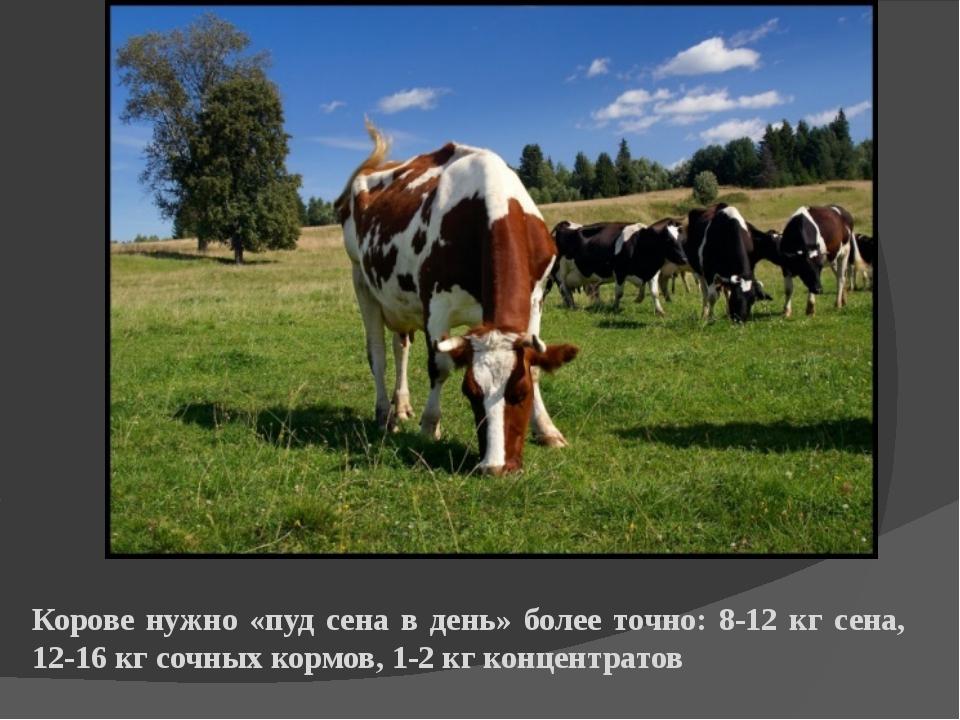 Корове нужно «пуд сена в день» более точно: 8-12 кг сена, 12-16 кг сочных кор...
