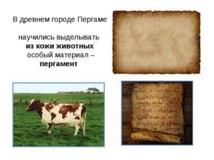 В древнем городе Пергаме научились выделывать из кожи животных особый материа