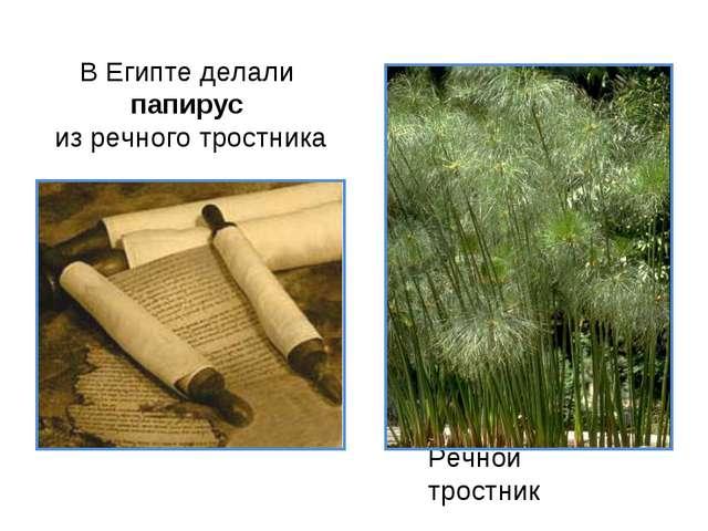 В Египте делали папирус из речного тростника Речной тростник