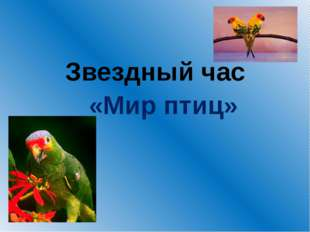 Звездный час «Мир птиц»