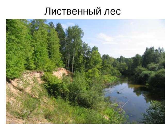 Лиственный лес
