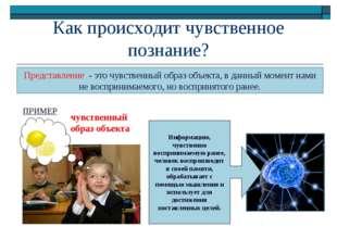 Как происходит чувственное познание? Представление - это чувственный образ об