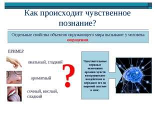 Как происходит чувственное познание? Отдельные свойства объектов окружающего