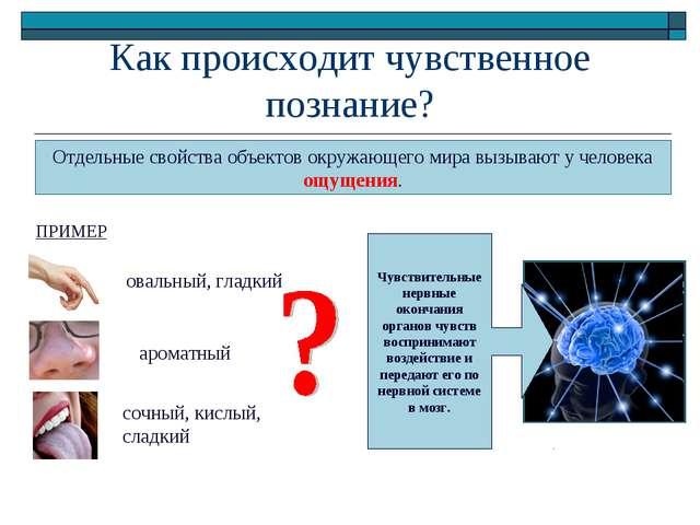 Как происходит чувственное познание? Отдельные свойства объектов окружающего...