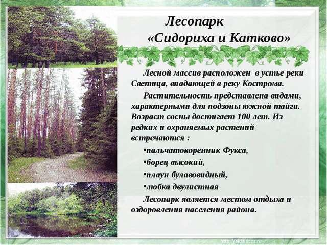 Лесопарк «Сидориха и Катково» Лесной массив расположен в устье реки Светица,...