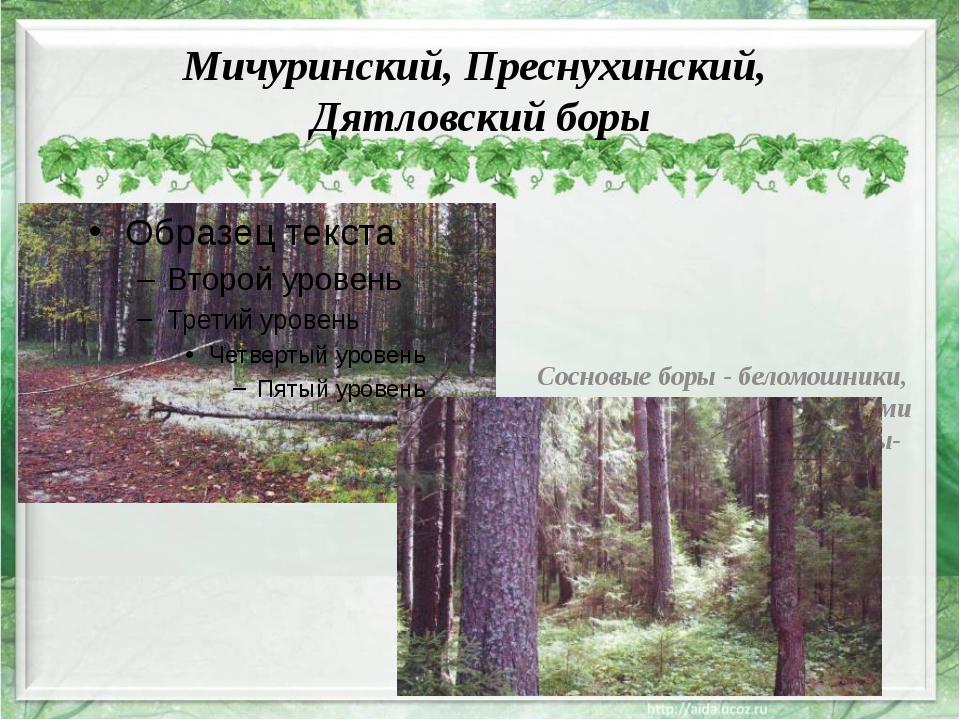Мичуринский, Преснухинский, Дятловский боры Сосновые боры - беломошники, пред...