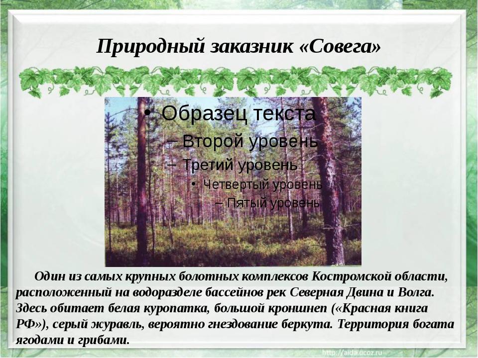 Природный заказник «Совега» Один из самых крупных болотных комплексов Костром...