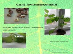 Опыт6 Размножение растений Зреющие семена защищает плод. Вывод:При определённ