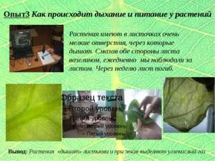 Опыт3 Как происходит дыхание и питание у растений Растения имеют в листочках