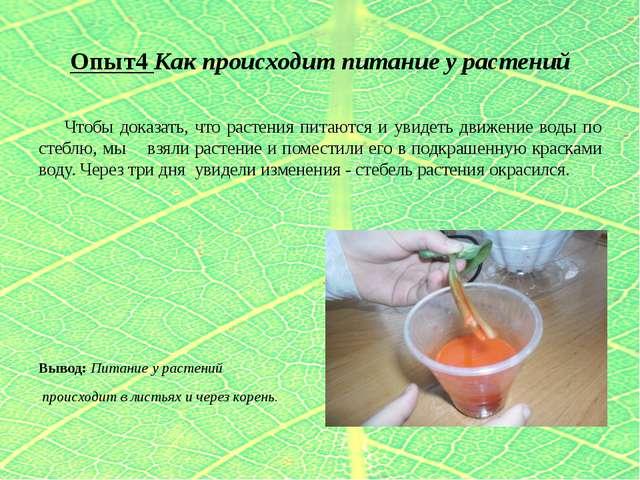 Опыт4 Как происходит питание у растений Чтобы доказать, что растения питаются...