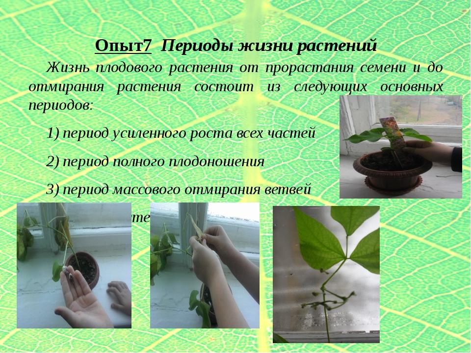 Опыт7 Периоды жизни растений Жизнь плодового растения от прорастания семени и...