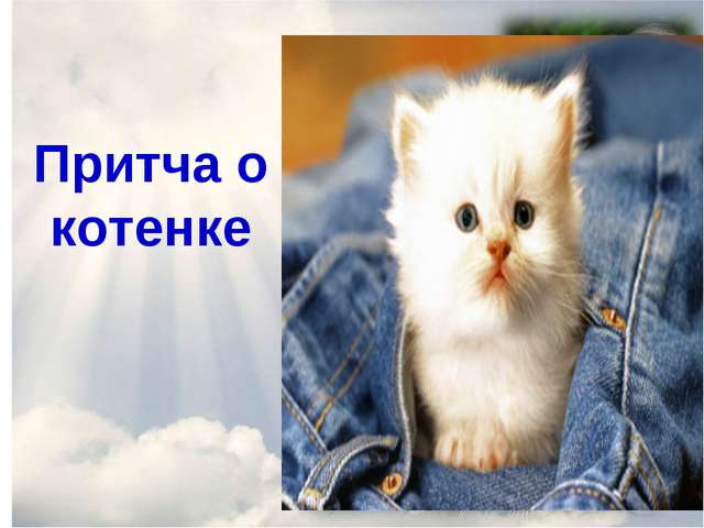Притча о котенке