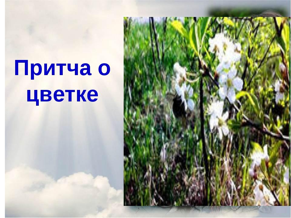 Притча о цветке
