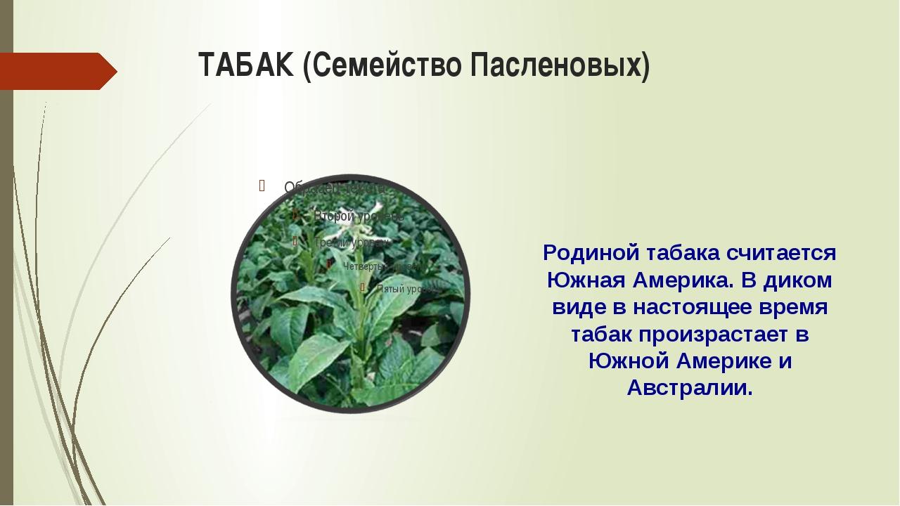 ТАБАК (Семейство Пасленовых) Родиной табака считается Южная Америка. В диком...
