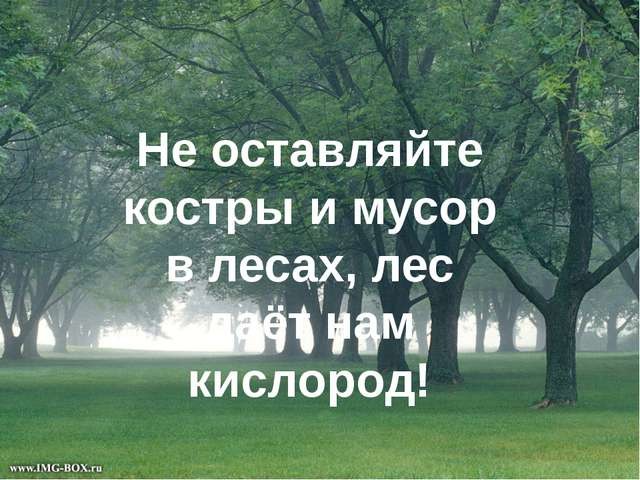 Не оставляйте костры и мусор в лесах, лес даёт нам кислород!