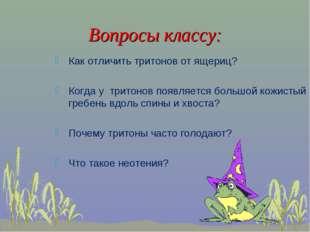 Вопросы классу: Как отличить тритонов от ящериц? Когда у тритонов появляется
