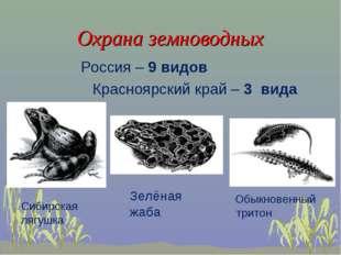 Охрана земноводных Россия – 9 видов Красноярский край – 3 вида Сибирская лягу