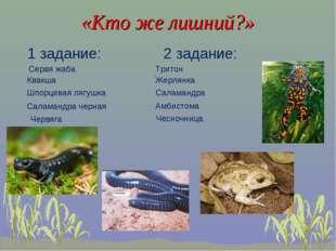 «Кто же лишний?» 1 задание: 2 задание: Квакша Шпорцевая лягушка Саламандра ч