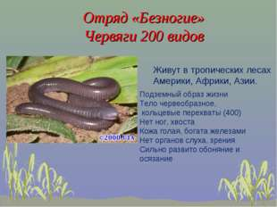 Отряд «Безногие» Червяги 200 видов Живут в тропических лесах Америки, Африки,