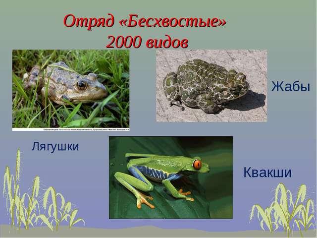Отряд «Бесхвостые» 2000 видов Лягушки Жабы Квакши