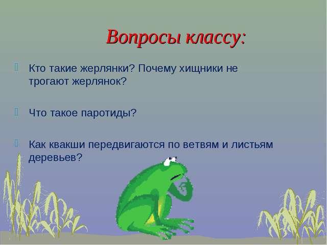 Вопросы классу: Кто такие жерлянки? Почему хищники не трогают жерлянок? Что т...